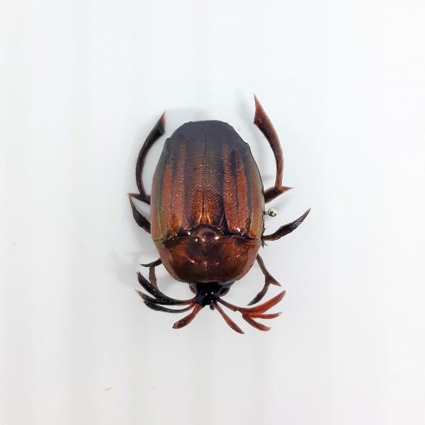 Майский жук BG-22