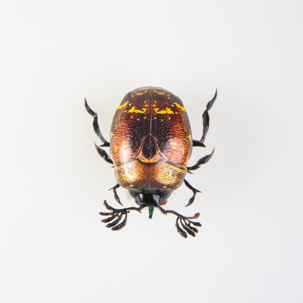 Майский жук BG-05