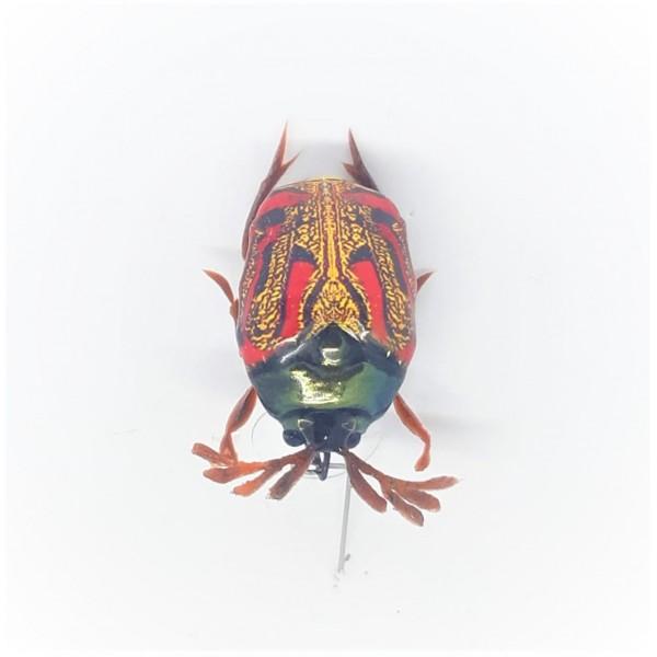 Майский жук SG-09 (уменьшенный размер)