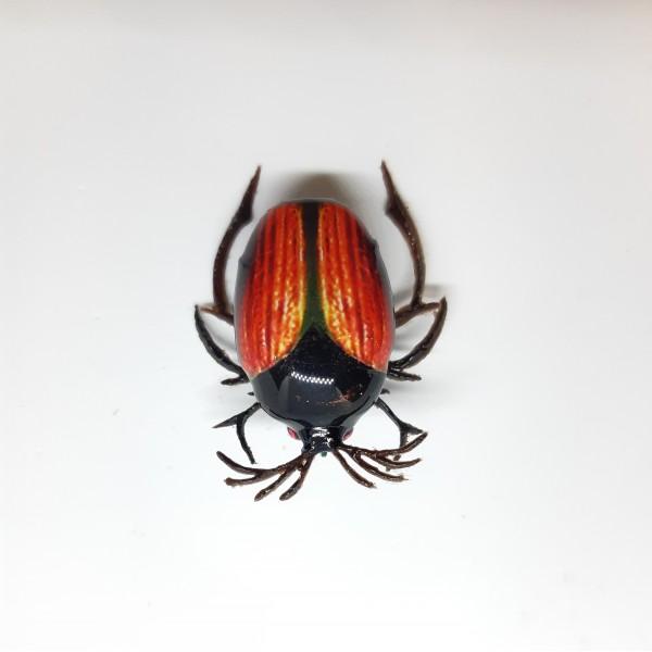 Майский жук BG-25