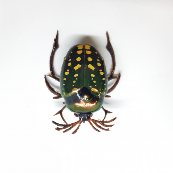 Майский жук BG-08