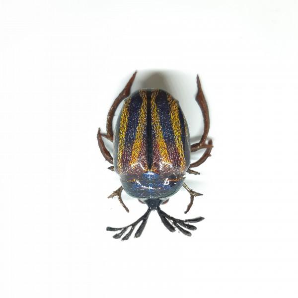 Майский жук BG-27